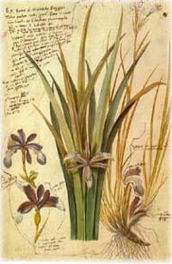 デューラー(1471-1528)