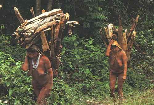 『最後の熱帯雨林』より