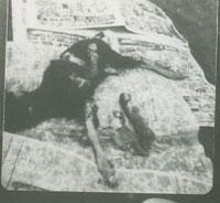 死産ででてきた山羊と猫の子(4月3日)